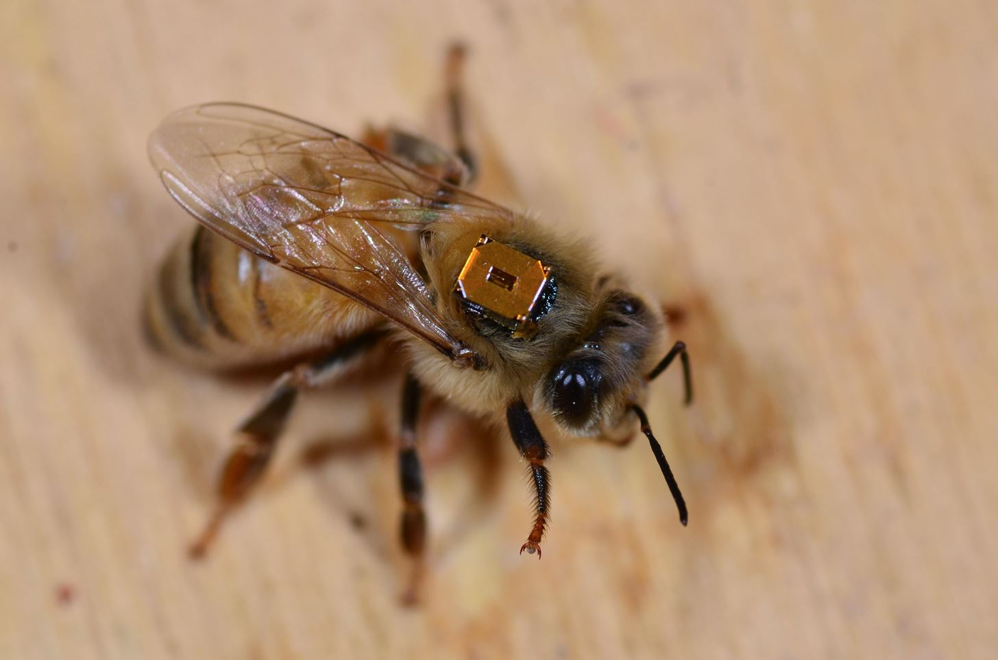 Biggest Bee Study Yet Shows Devastating Effects of Neonicotinoids Across the Globe