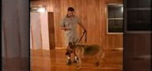 Train a dog commands with hand signals
