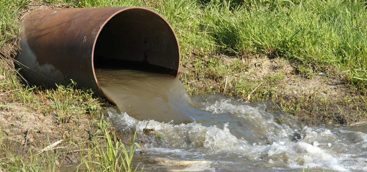 These Special Sewage Bacteria Can Turn Dirty Water into Energy