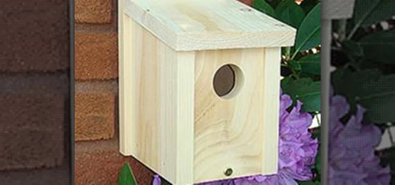 Basic bird house design