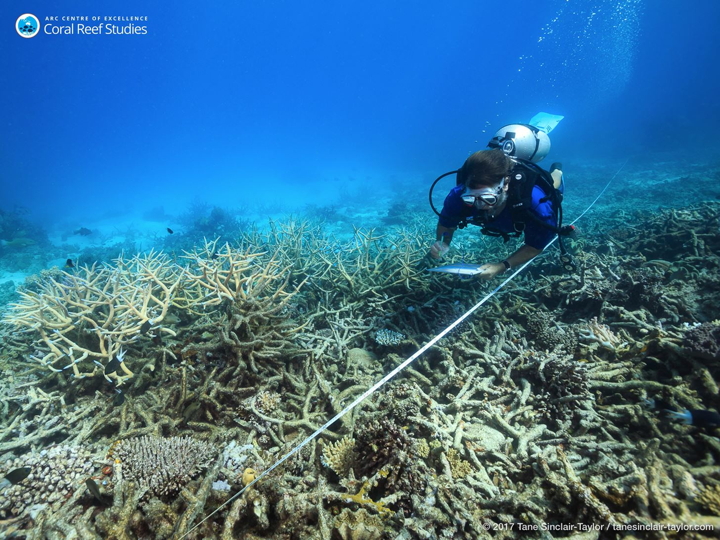 Microbes Lost from Corals Due to Global Warming Cause 90% of Great Barrier Reef to Bleach