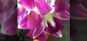 Care for orchids & keep them fragrant & happy