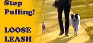 Train a dog not to pull with loose leash walking