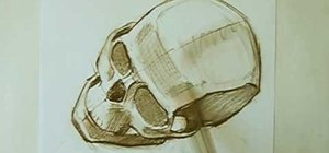 Draw a skull with proper proportions