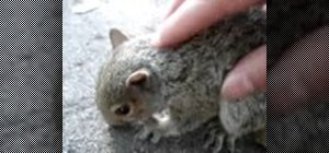 Massage and feed a squirrel
