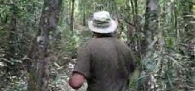 How to Chop through dense forests with a machete « Hiking :: WonderHowTo