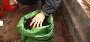Grow potatoes in a potato planter bag easily