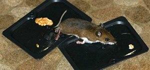 Mouse Trap 2.0