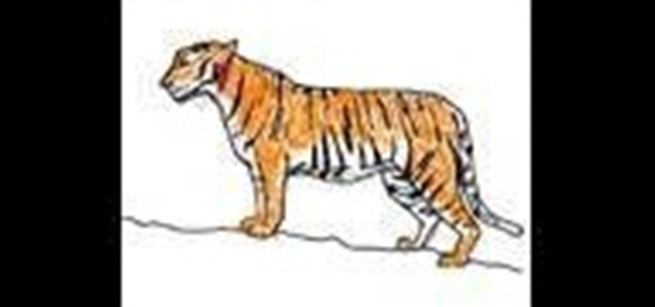 How To Draw And Color A Simple Tiger Tigre Drawing