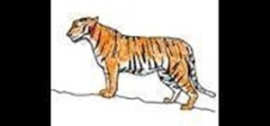 Draw and color a simple tiger (tigre)