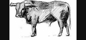 Draw a simple bull (toro)