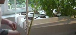 Build an aeroponic fogger for your hydroponic system