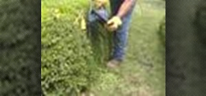Trim a hedge with straight edges