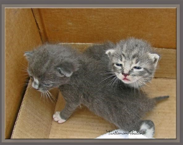 Adopt-a-Kitty
