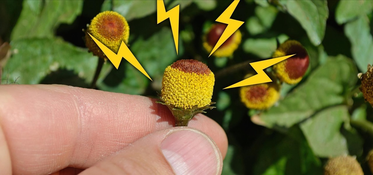 These Edible Flowers Will Literally Shock You