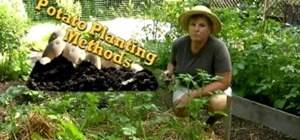 Plant potatoes using a couple different methods