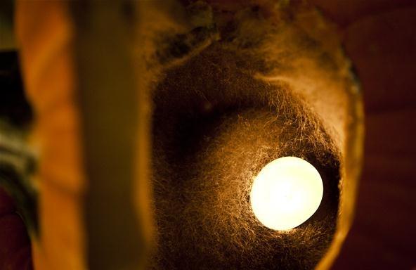 Nature Makes Jack-O'-Lanterns Way Creepier