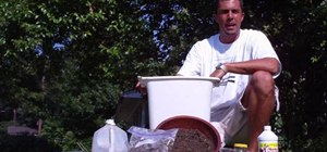 Make the best compost tea from scratch