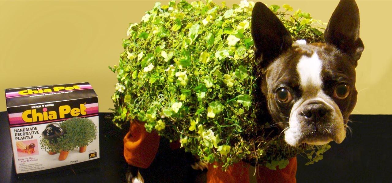 Chia Pet Pet Costume Plus 9 More Adorable Diy Halloween