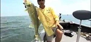 Catch walleyes