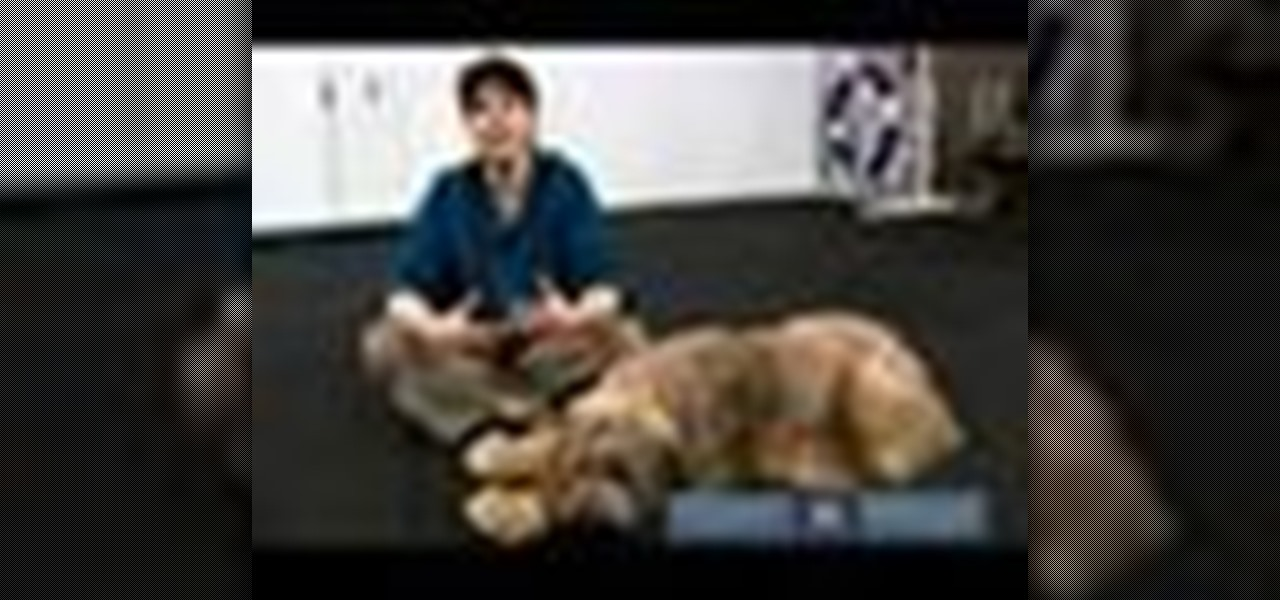how to train your dog How to train your dog to roll over so you've trained your dog to sit, stay and lie  down, and you're ready to move on to an advanced.