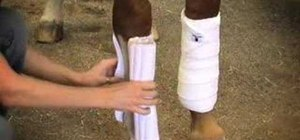Apply standing wraps