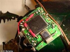 Shh...Cyborg Spy Beetles Released by DARPA