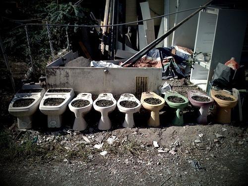 Toilet Roulette