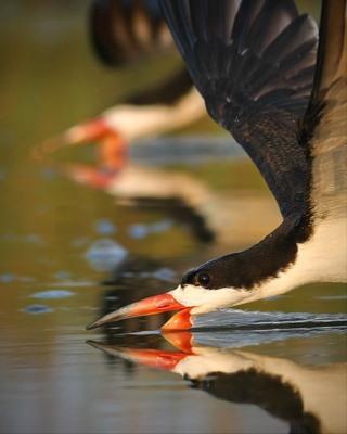 "Winner Announcement - Chasing The Light, Bird Portraits ""The Avian Persona"""