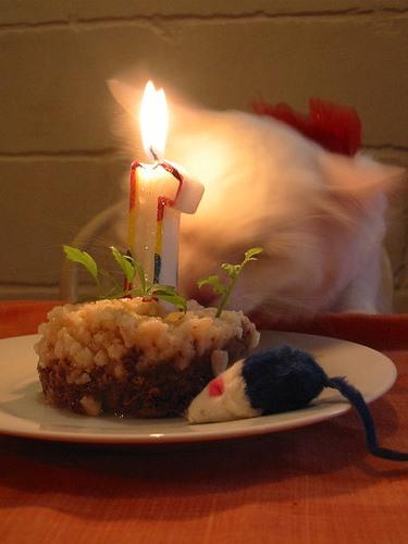 NOM NOM NOM Cats & Dogs Yum Cake, Too
