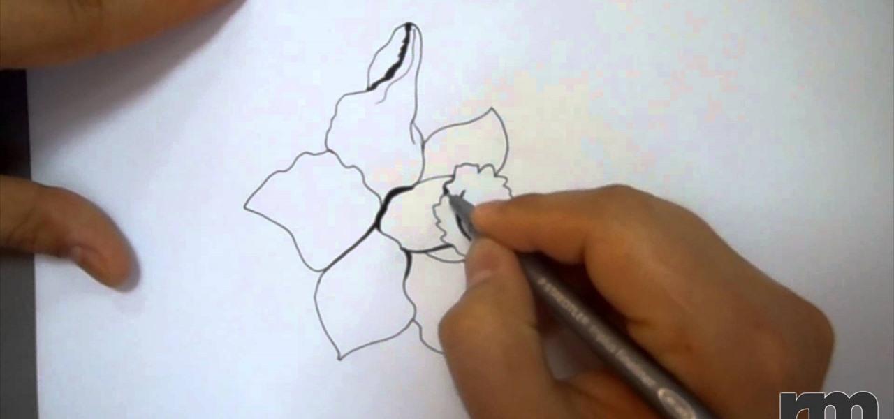 a Daffodil Flower