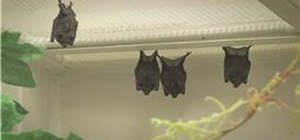 Take care of a bat