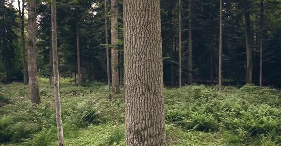 5D Shot Forest Aerials
