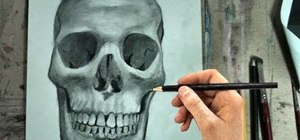 Draw the human skull in frontal view