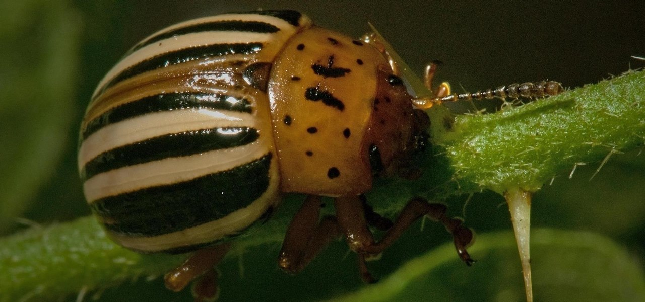 Get Rid of Plant-Eating Pests Using 100% Natural Solutions from Your Home and Garden