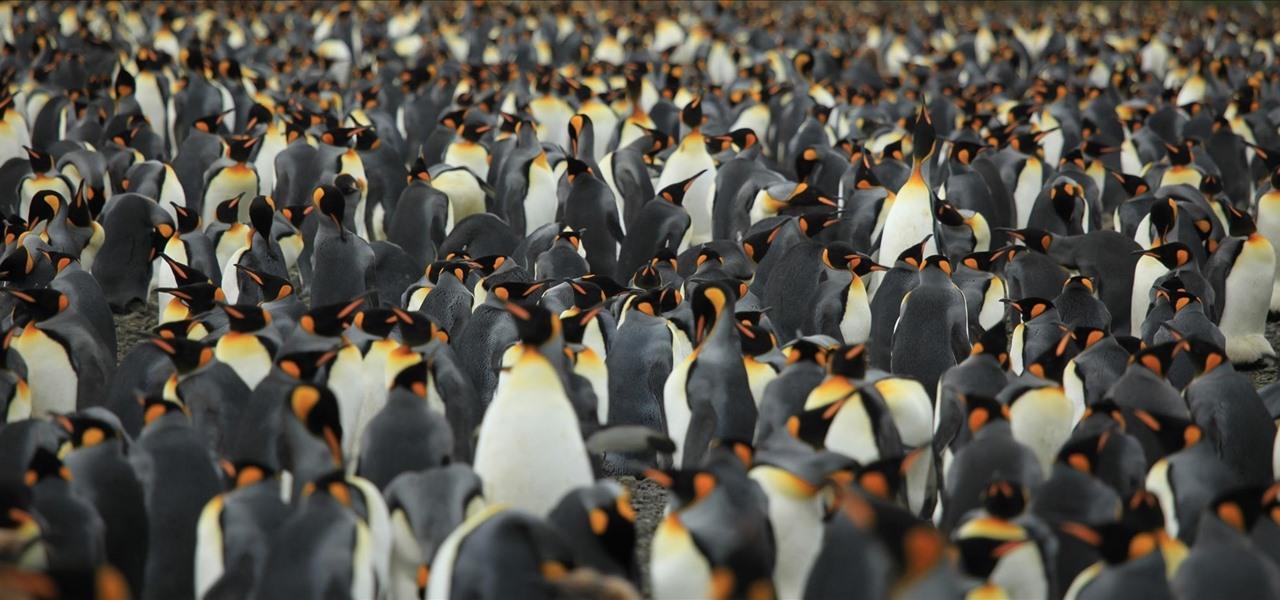 Linux Basics for the Aspiring Hacker, Part 4 (Finding Files)