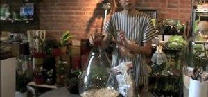 Sprout a home terrarium