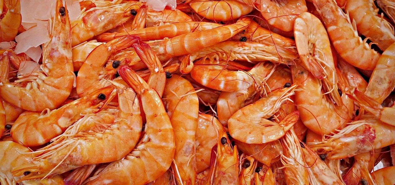 Bandages Made of Recycled Shrimp Shells Fight Infections & Stop Bleeding