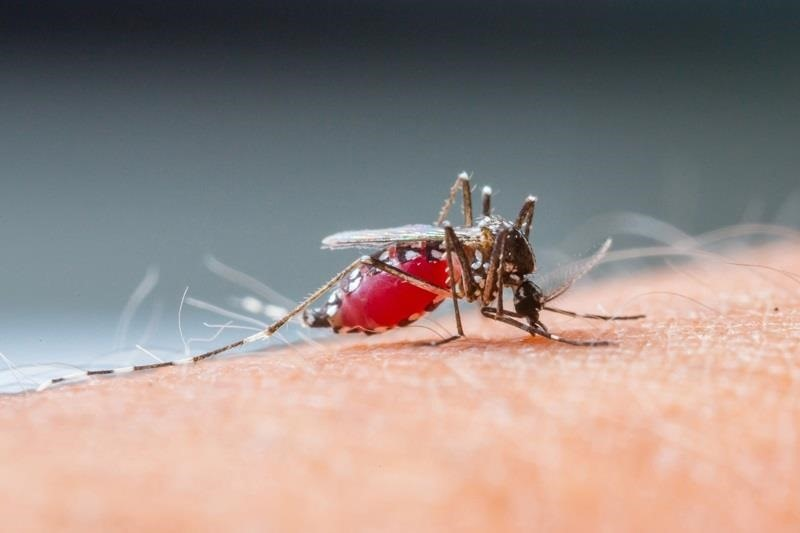 How to Keep Mosquitoes & Other Annoying Bugs Away from Your Campfire or Backyard Fire Pit