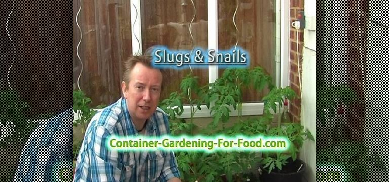 How To Get Rid Of Garden Slugs Without Using Pesticides Gardening