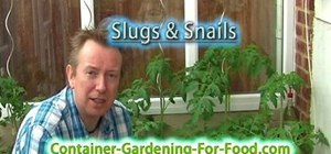 Get rid of garden slugs without using pesticides
