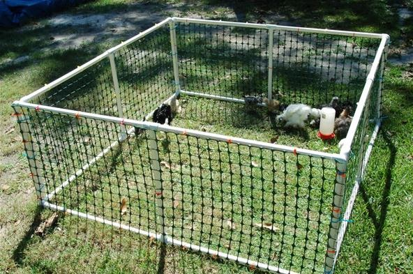 Baby Chicken Play Pen!