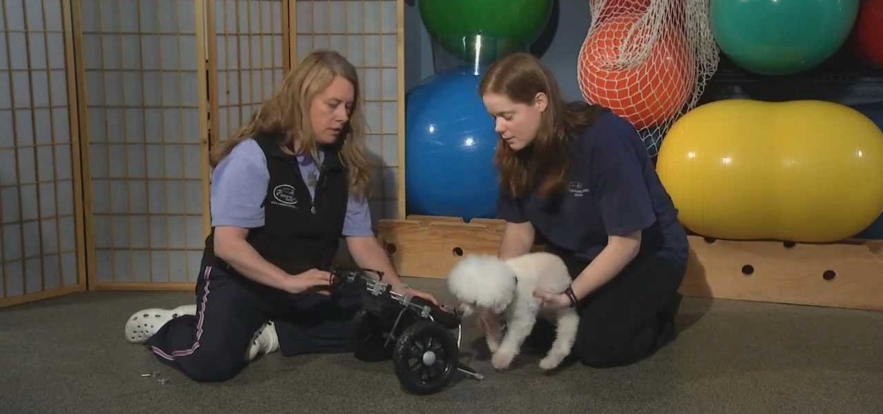 How a Wheelchair Can Help Your Disabled Dog