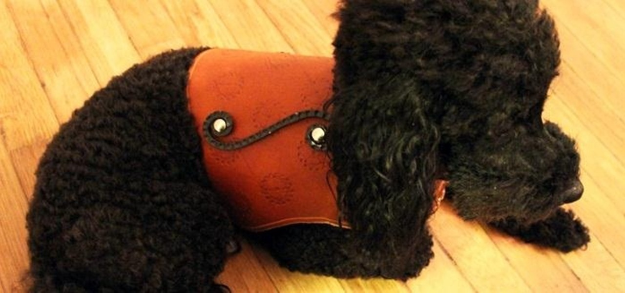 How to Make a Leather Harness for Your Dog