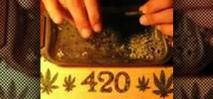 Roll a joint or a hash blunt