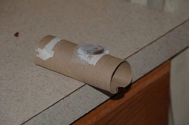 5 Clever Ways To Make A Simple No Kill Trap For Mice