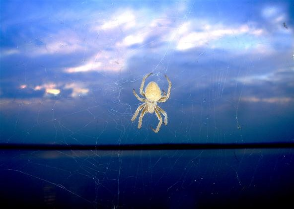 Insect Photography Challenge: Spider in the Sky