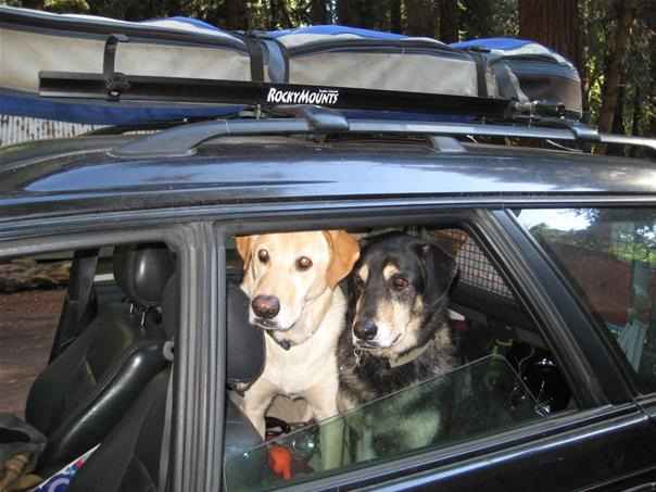 Pictures of Two Traveling Hounds
