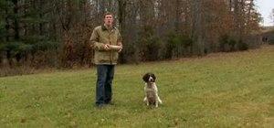 Teach your dog to retrieve