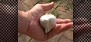 Grow fresh garlic indoors